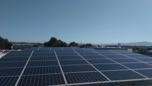 Coastline Family Farms roof covered in high efficiency solar panels